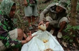 Musim Pandemi, Petani Madu Hutan Banjir Pesanan