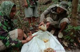 Permintaan Madu Hutan Meningkat saat Pandemi Covid-19