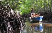 Siti Nurbaya Tinjau Wisata Edukasi Hutan Bakau Munjang Kurau Barat