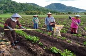 Hasil Panen Petani Kentang Bolaang Mongondow Meningkat…