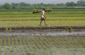 Pemkot Bengkulu Salurkan 10,75 Ton Benih Padi ke Petani