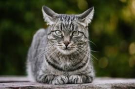 Mengintip Bisnis Penuh Risiko, Jual Beli Kucing Ras
