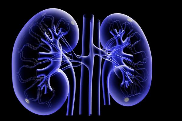 Ginjal - thekidneysolution.com