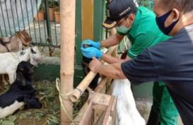 Jelang Iduladha, 162 Hewan Kurban di DKI Tidak Memenuhi Syarat
