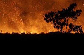 Kebakaran Australia Bikin Miliaran Satwa Lokal Mati…