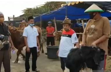Menteri Agama Imbau Pemotongan Hewan Kurban Aman dari Penularan Virus Corona