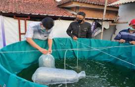 UMM Perkenalkan Budi Daya Ikan Lele dengan Sistem Biona
