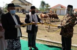 Wapres Ma'ruf Amin Kurban Sapi Limosin di Serang