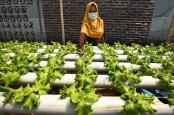 Peluang Terbuka, Pertanian Hidroponik Makin Asyik