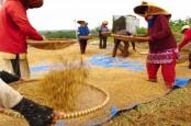 Nilai Tukar Petani Naik 0,49 Persen, Meski Tanaman Pangan dan Hortikultura Turun