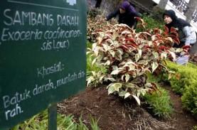 Kemenristek: Hadi Pranoto Bukan Anggota Peneliti Herbal…