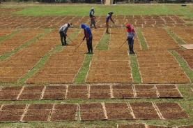 APTI: Simplifikasi Cukai Rugikan Pemerintah, Petani…