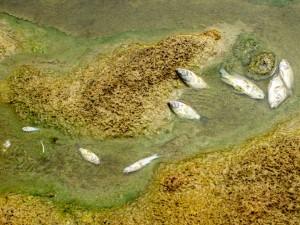 Sungai Citarum Kembali Tercemar Limbah Industri