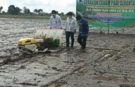 Ini Penyebab Sektor Pertanian Tumbuh saat PDB Indonesia Kontraksi