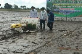 Ini Penyebab Sektor Pertanian Tumbuh saat PDB Indonesia…