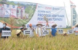 Gagas PKPT, Pupuk Kaltim Berhasil Tingkatkan Produktivitas Padi Petani Jember