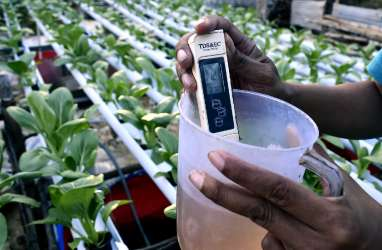 Lebak Galakkan Masyarakat Kembangkan Sayuran Hidroponik