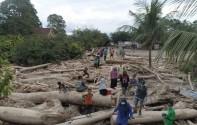 Marak Pembalakan Liar, Sulsel Butuh 1.000 Personel Polisi Hutan