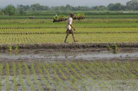 Orang Kota Panik Resesi, Orang Desa Sibuk Bertani.…