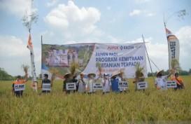 PEMENUHAN BAHAN POKOK : Strategi Melepas Jeratan Impor Pangan