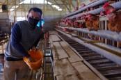 Semen Indonesia Dampingi UMKM Unggas di Tuban