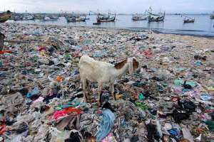 Pantai di Pelabuhan Muncar Banyuwangi Dipenuhi Tumpukan Sampah