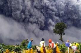 Ratusan Hektare Tanaman Kentang di Karo Hancur Akibat Erupsi Sinabung