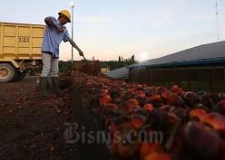 Kenaikan Permintaan CPO dari China dan India Kerek Harga Sawit di Riau