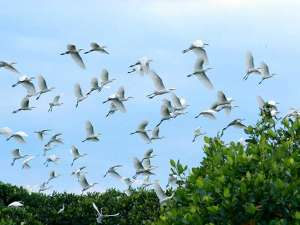 Taman Kili-kili Taman Nasional Alas Purwo di Banyuwangi Jadi Habitat Baru Burung Kuntul