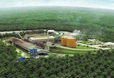 Ini Strategi Eagle High Plantations (BWPT) Jaga Likuiditas