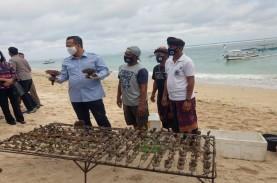 Petani Karang Hias di Pantai Pandawa Bali Tetap Ekspor…