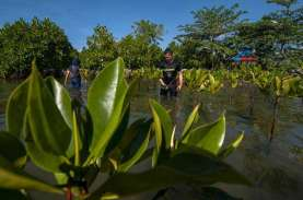 HUT RI, Pelindo I Tanam Mangrove & Beri Bantuan untuk…