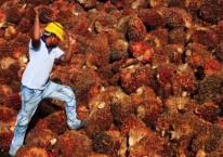 Seorang pekerja mengumpulkan buah kelapa sawit di dalam sebuah pabrik minyak sawit di Sepang, di luar Kuala Lumpur, Malaysia. / REUTERS - Samsul Said