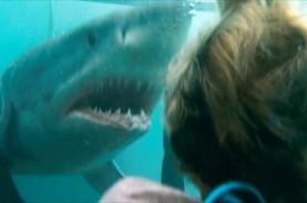 Menegangkan, Film Shark Night Tayang Malam Ini di…