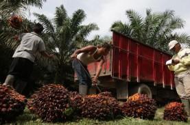 PELEMAHAN PRODUKSI INDONESIA : Harga CPO Kembali Terdongkrak