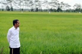 Jokowi Tegaskan Food Estate untuk Perkuat Cadangan…