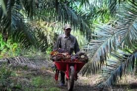 HUT Ke-75 RI, Target 20.000 Barel Biosolar (D100) Presiden Jokowi & Prospek Emiten Sawit