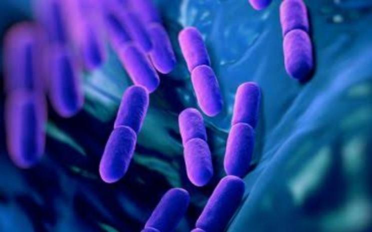 Ilustrasi probiotik