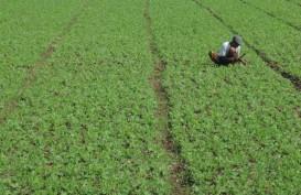 Sulbar Kembangkan Tanaman Kedelai di Lima Kabupaten