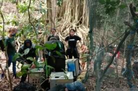 Kera Topeng Moyet Dilepasliarkan di Pulau Nusa Barong