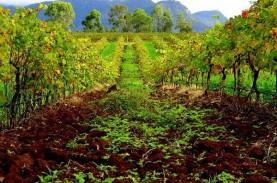 China Selidiki Antidumping di Produk Minuman Anggur…