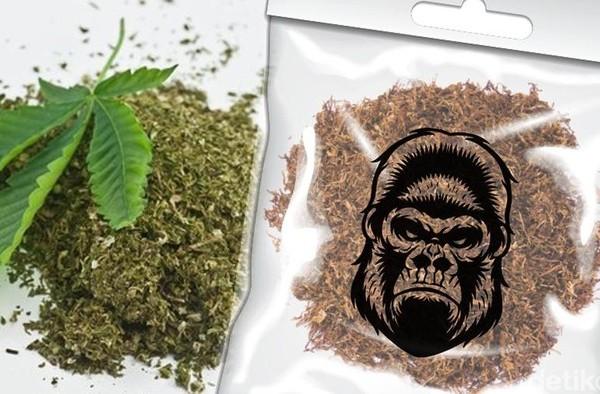 Bea Cukai Kendari dan BNN Amankan 19.52gr Tembakau Gorila