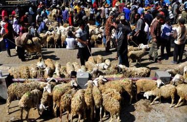 Harumnya Bisnis Domba Kambing di Tengah Pandemi