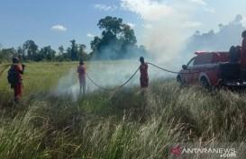 Kawasan Taman Nasional Rawa Aopa di Sulawesi Tenggara Terbakar