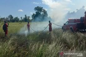 Kawasan Taman Nasional Rawa Aopa di Sulawesi Tenggara…