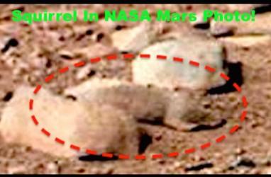 Aneh Tapi Nyata, Tupai Alien Ditemukan Hidup di Planet Mars