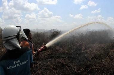 Pakar Ingatkan Pembakaran Lahan oleh Masyarakat Berisiko Tinggi