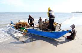 KKP Kembangkan Kemasan Plastik dari Rumput Laut