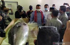 2,22 Ton Ikan Tuna Segar Maluku Diekspor ke Jepang