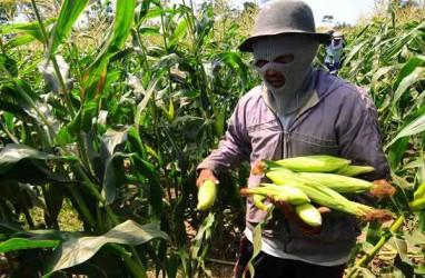 Kementan Kucurkan Rp136 Miliar untuk Pengembangan Pertanian di Sulut